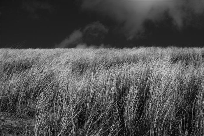 grasses-14
