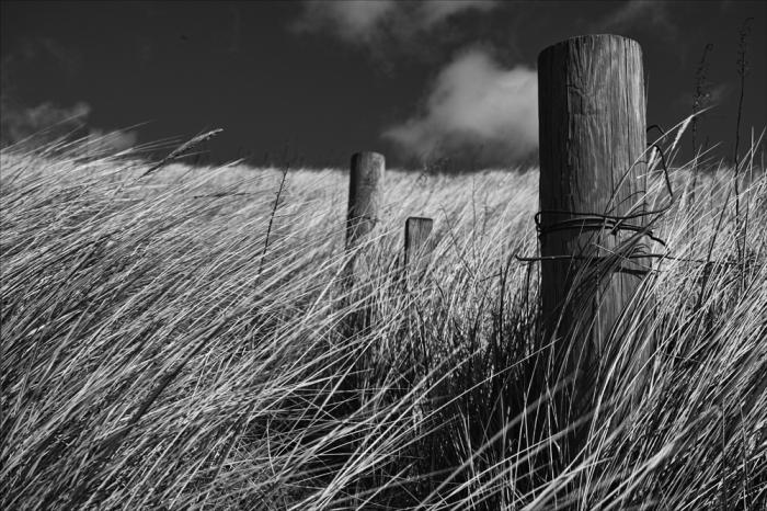 grasses-6