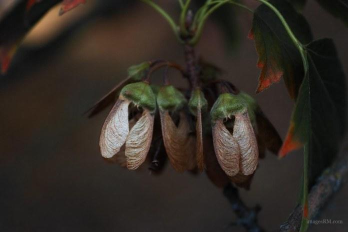 not-moths-2