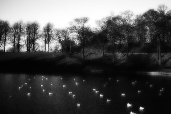radiated-birds